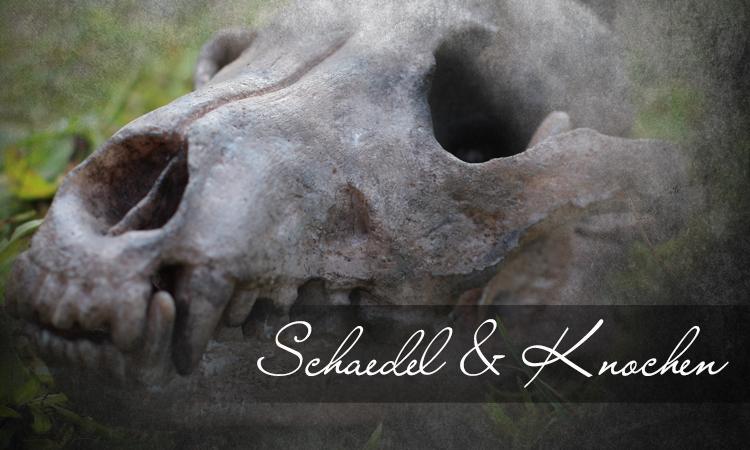Schädel & Knochen | Larpwaffen | Wyvern Crafts