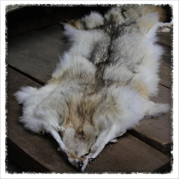 Großes Kojotenfell